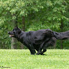 Chesapeake Disc Dogs Club, May 2018-5090
