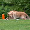 Chesapeake Disc Dogs Club, May 2018-5111