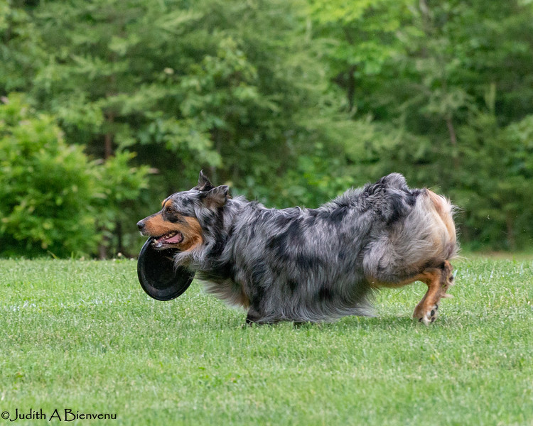 Chesapeake Disc Dogs Club, May 2018-5083