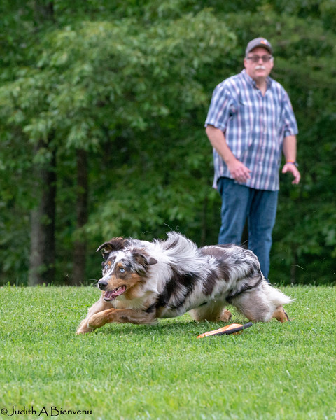 Chesapeake Disc Dogs Club, May 2018-5045