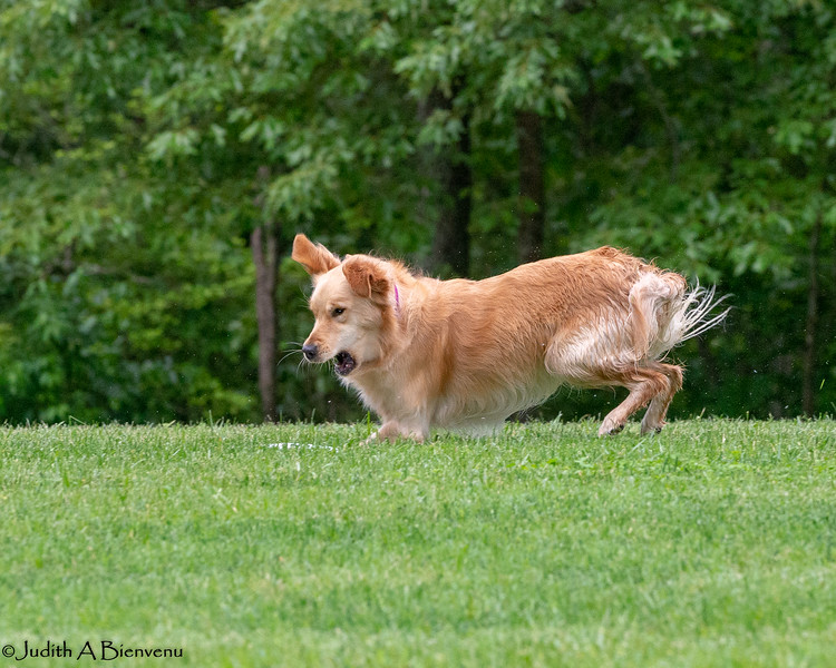 Chesapeake Disc Dogs Club, May 2018-5110