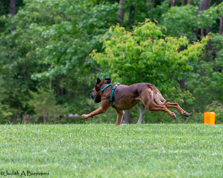 Chesapeake Disc Dogs Club, May 2018-5028