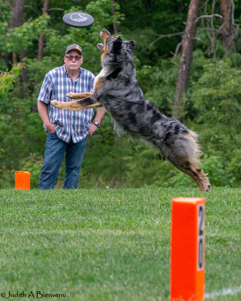 Chesapeake Disc Dogs Club, May 2018-5069