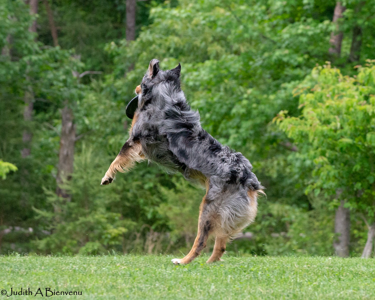 Chesapeake Disc Dogs Club, May 2018-5071
