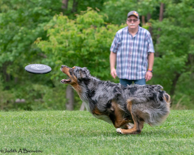 Chesapeake Disc Dogs Club, May 2018-5080