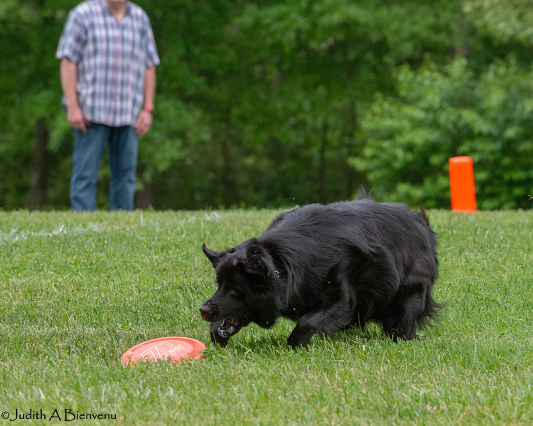 Chesapeake Disc Dogs Club, May 2018-5096
