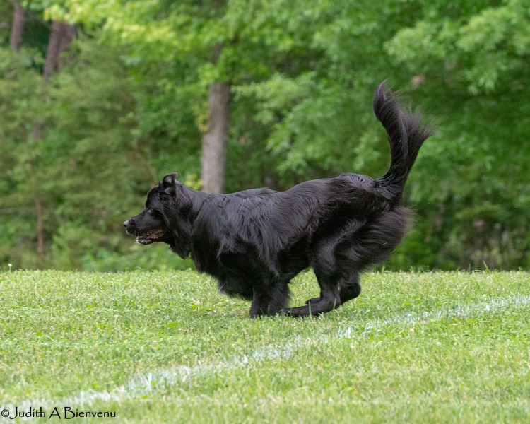 Chesapeake Disc Dogs Club, May 2018-5093