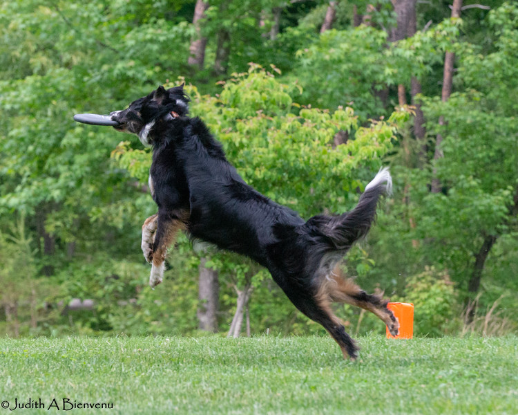 Chesapeake Disc Dogs Club, May 2018-5119