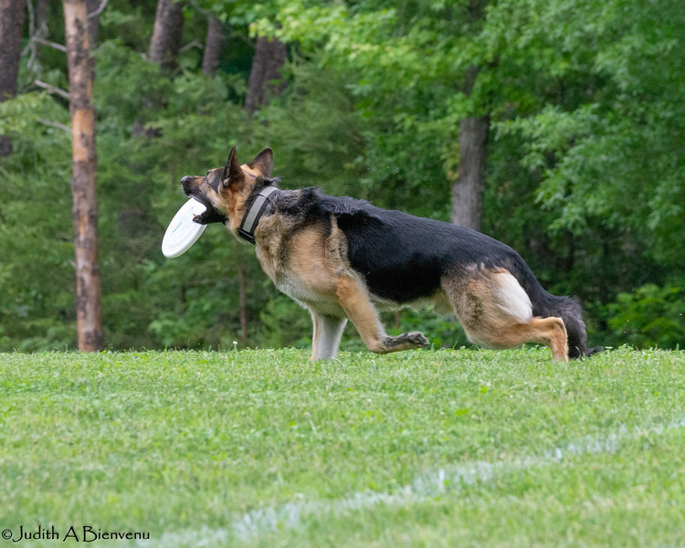Chesapeake Disc Dogs Club, May 2018-5038