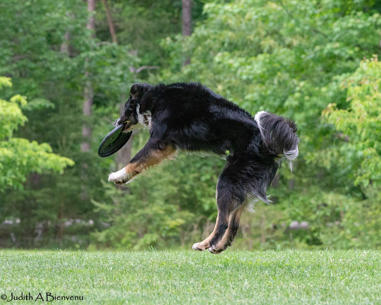 Chesapeake Disc Dogs Club, May 2018-5120