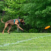 Chesapeake Disc Dogs Club, May 2018-5147