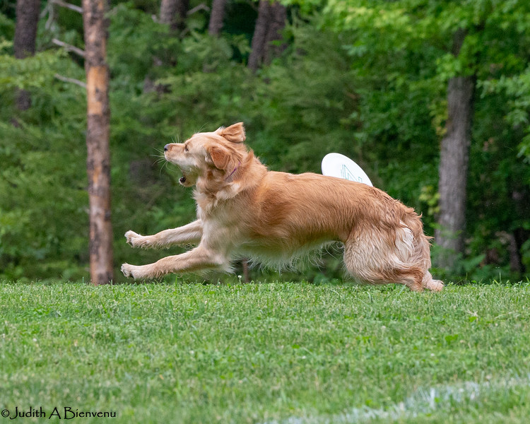 Chesapeake Disc Dogs Club, May 2018-5114