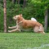 Chesapeake Disc Dogs Club, May 2018-5114