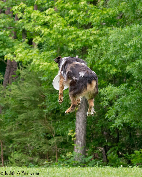 Chesapeake Disc Dogs Club, May 2018-5106