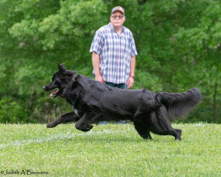 Chesapeake Disc Dogs Club, May 2018-5092