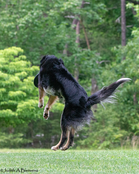 Chesapeake Disc Dogs Club, May 2018-5131