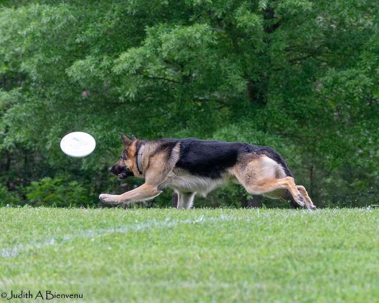Chesapeake Disc Dogs Club, May 2018-5031