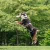 Chesapeake Disc Dogs Club, May 2018-5103