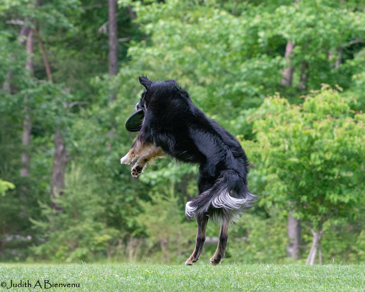 Chesapeake Disc Dogs Club, May 2018-5130