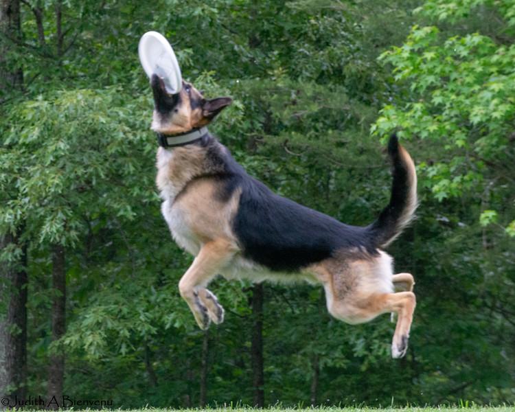Chesapeake Disc Dogs Club, May 2018-5034