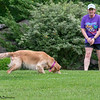 Chesapeake Disc Dogs Club, May 2018-5113