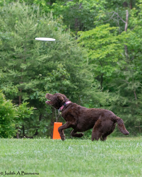 Chesapeake Disc Dogs Club, May 2018-5064