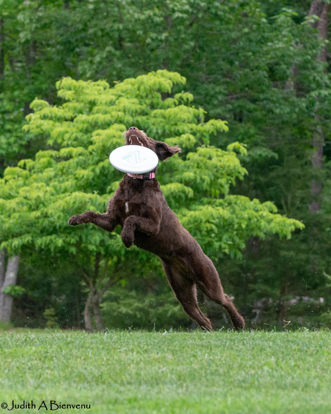 Chesapeake Disc Dogs Club, May 2018-5055