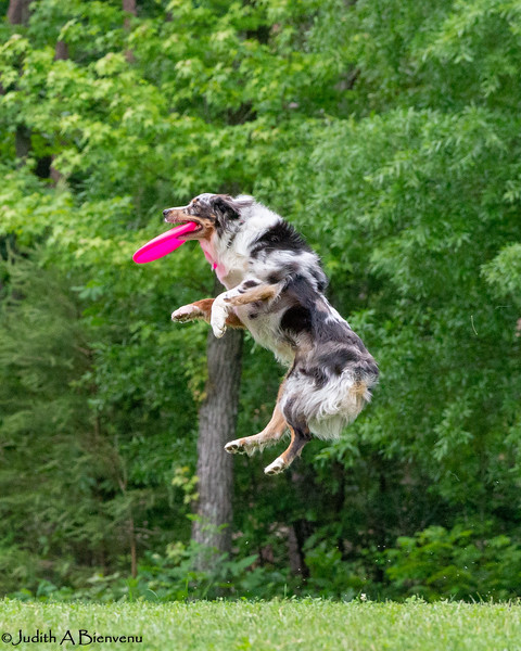 Chesapeake Disc Dogs Club, May 2018-5137