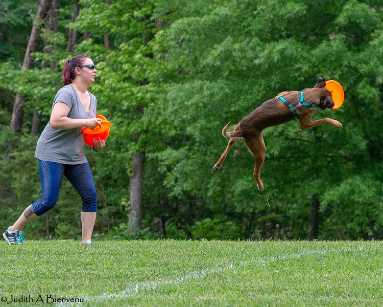 Chesapeake Disc Dogs Club, May 2018-5143