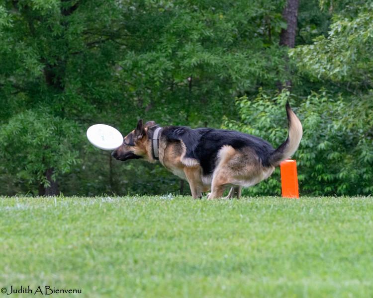 Chesapeake Disc Dogs Club, May 2018-5030