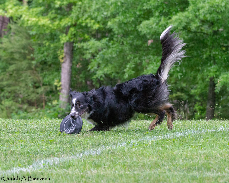Chesapeake Disc Dogs Club, May 2018-5135
