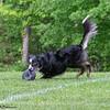 Chesapeake Disc Dogs Club, May 2018-5135