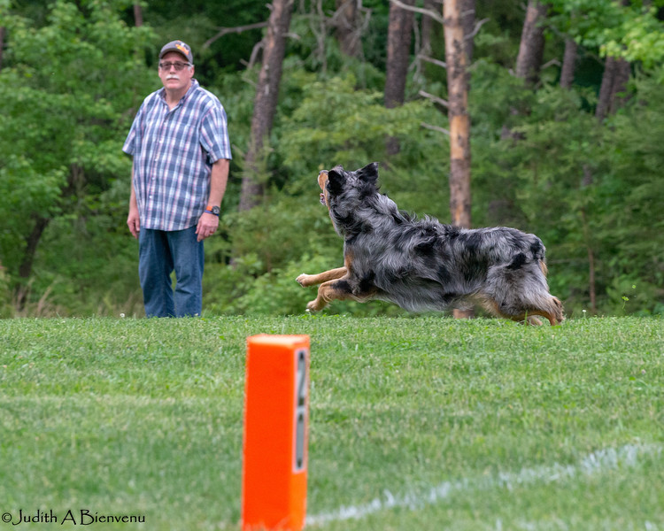 Chesapeake Disc Dogs Club, May 2018-5075