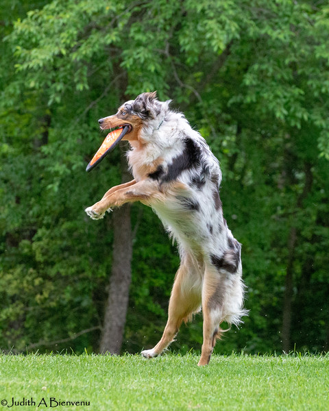 Chesapeake Disc Dogs Club, May 2018-5049