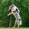 Chesapeake Disc Dogs Club, May 2018-5049
