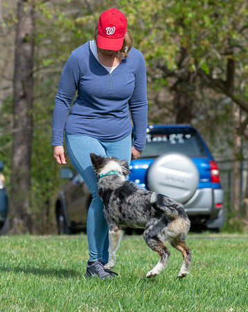 Chesapeake Disc Dogs Club, May 2018