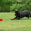 Chesapeake Disc Dogs Club, May 2018-5095