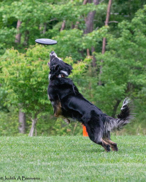 Chesapeake Disc Dogs Club, May 2018-5129