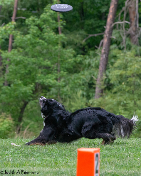 Chesapeake Disc Dogs Club, May 2018-5118