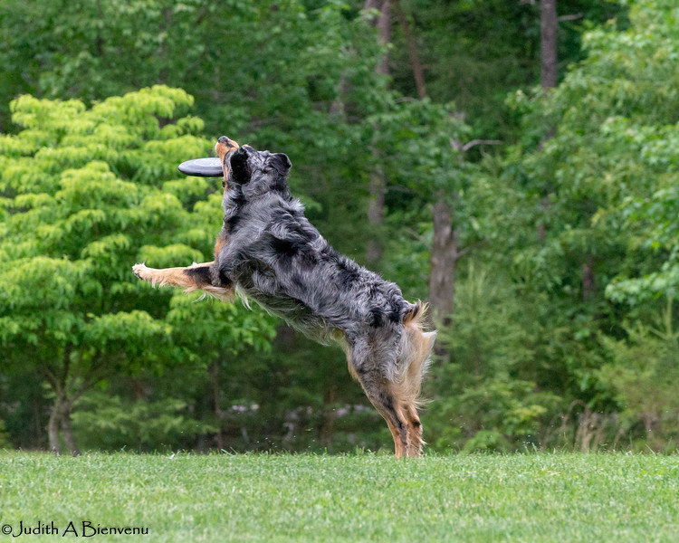 Chesapeake Disc Dogs Club, May 2018-5078