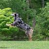 Chesapeake Disc Dogs Club, May 2018-5078