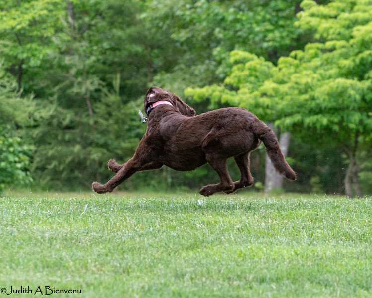 Chesapeake Disc Dogs Club, May 2018-5062