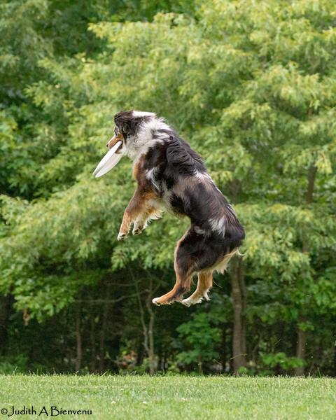 Chesapeake Disc Dogs Club, May 2018-5104