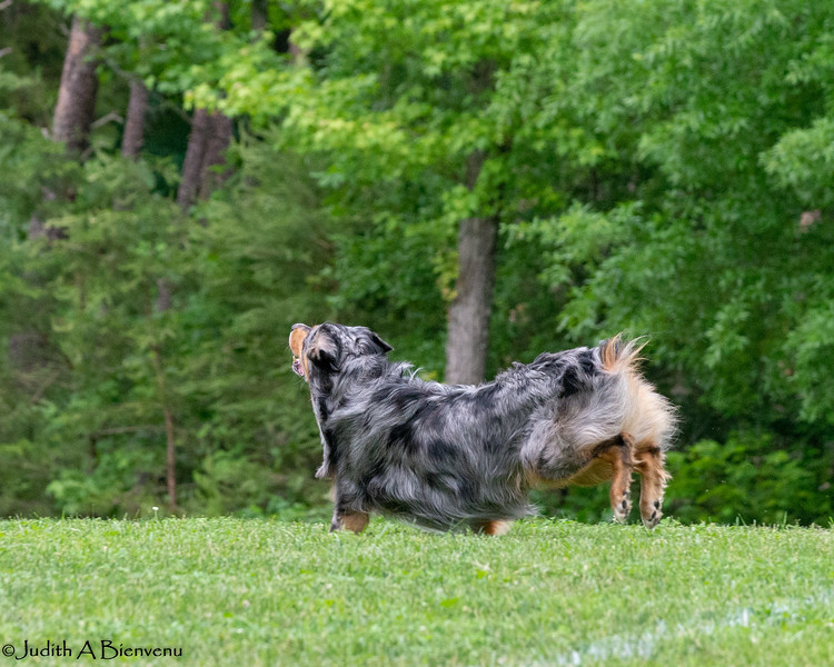 Chesapeake Disc Dogs Club, May 2018-5074