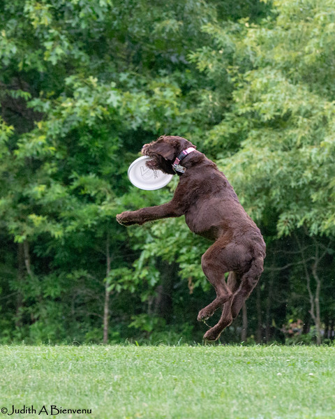 Chesapeake Disc Dogs Club, May 2018-5067