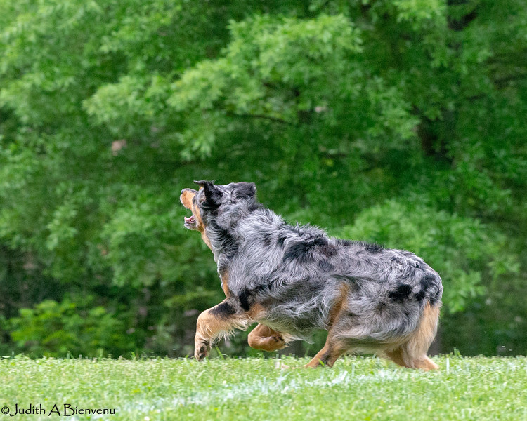Chesapeake Disc Dogs Club, May 2018-5073