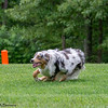 Chesapeake Disc Dogs Club, May 2018-5046