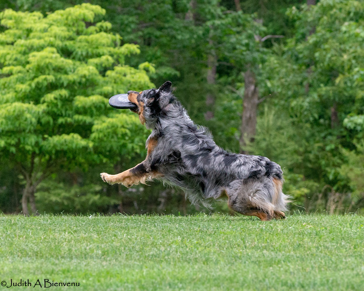 Chesapeake Disc Dogs Club, May 2018-5086