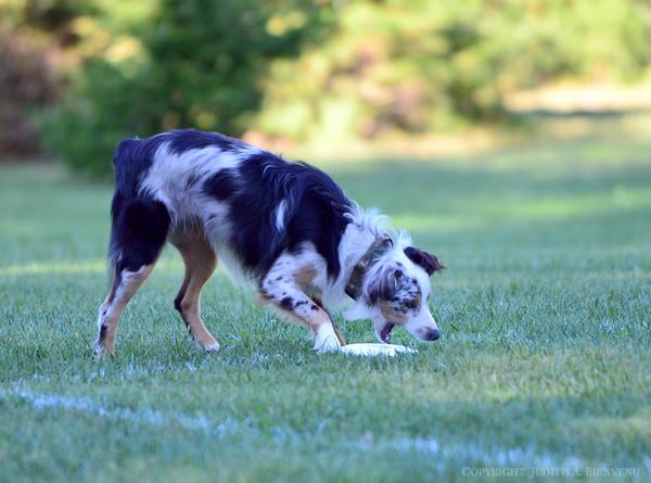 Chesapeake Disc Dogs September 23, 2017