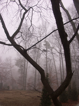 Tree in the fog from our Severna Park backyard.